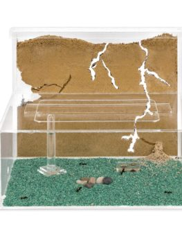 large sand ant farm