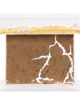 large t shape ant formicarium
