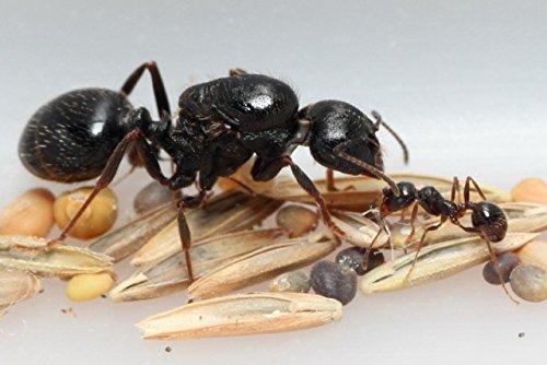 ant keeping uk