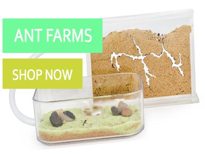 Ant Farms Shop
