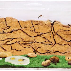 Ant Farm Fish Tank