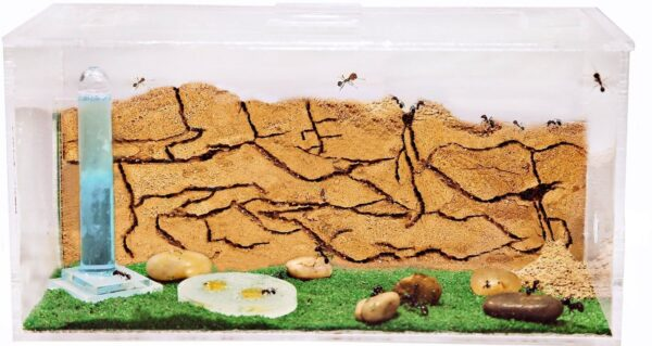 Ant Farm Fish Tank