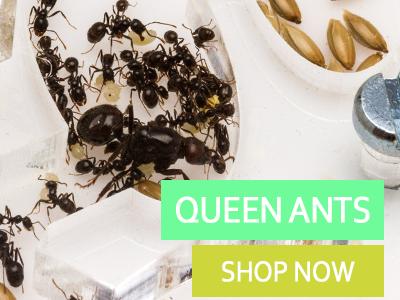 Ant Shop